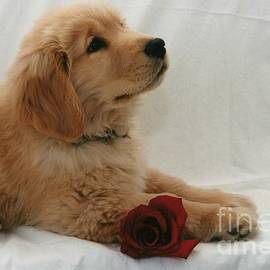 Robin Lee Mccarthy Photography - #502 22 Puppy Love