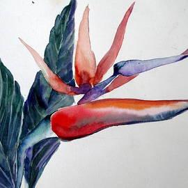 Mindy Newman - Bird of Paradise