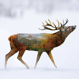 Mark Ashkenazi - Deer