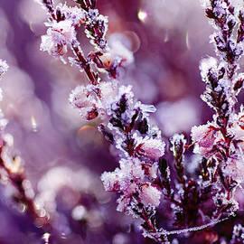 Roksana Bashyrova - Frozen heather flower