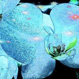 Xueyin Chen - Orchids