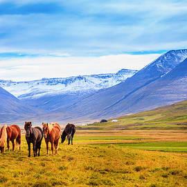 Alexey Stiop - Icelandic ponies