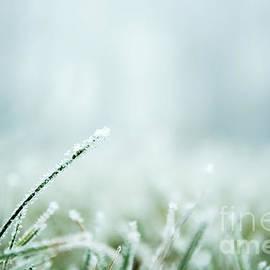 Sabina  Horvat - Winter Frost