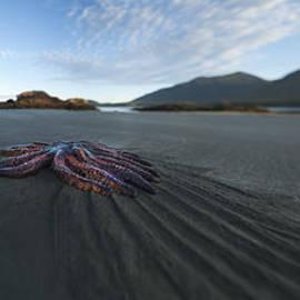Dave Bryson - 7286 Sunflower Starfish Racing Towards The Ocean