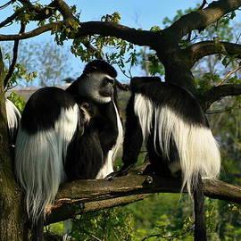 Pavel Jankasek - Monkey In A Tree
