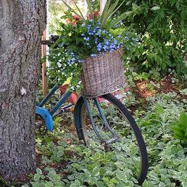 Robin Lee Mccarthy Photography - #755 D45 Bike And A Basket of Flowers