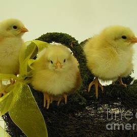Robin Lee Mccarthy Photography - #801 D409 Chicks Rule