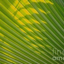 Dennis Knasel - Botanical Shadow