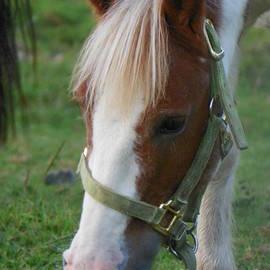 Robin Lee Mccarthy Photography - #925 D757 Salad Of Greens Crescent Farm Horse