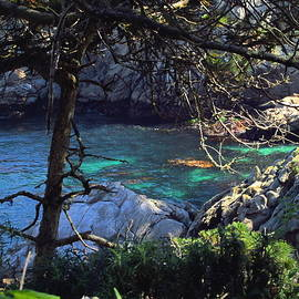 Joyce Dickens - A Beautiful Cove At Point Lobos