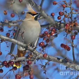 Nina Stavlund - A Bird for its Crest..
