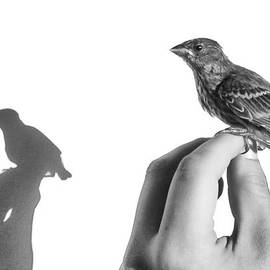 Caitlyn  Grasso - A Bird on the Hand