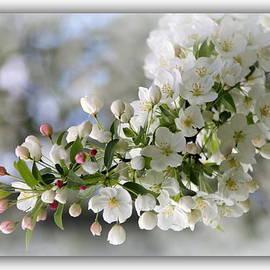 Rosanne Jordan - A Breath of Spring
