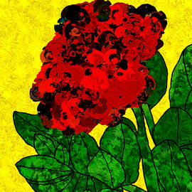 Bruce Nutting - A Bright Red Rose for My Honey