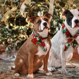Shelley Neff - A Bubba and Kensie Christmas - No Text