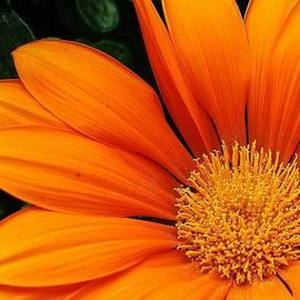 Bruce Bley - A Burst of Orange
