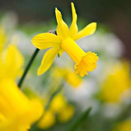 Sarah-fiona  Helme - A Burst of Spring