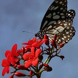 Bruce Bley - A Butterfly