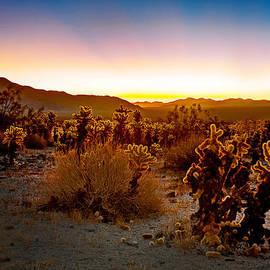 Aron Kearney Fine Art Photography - A Cactus Paradise