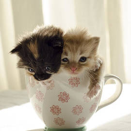 Karen Lawrence Spikey Mouse Photography - A cup of cuteness