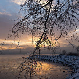 Georgia Mizuleva - A Curtain of Frozen Branches - Ice Storm Sunrise