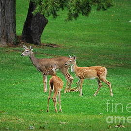 Bob Sample - A Doe And Her Twin Fawns