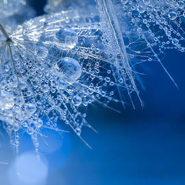 Silke Tuexen - A dreamy dandelion four