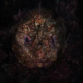 Richard Shelton - A face In The Dark