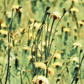 Steve Taylor - A Field of Summer Dreams