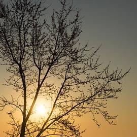 Georgia Mizuleva - A Filigree of Branches Framing the Sunrise