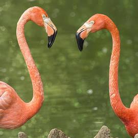 Bill Tiepelman - A Flamingo Hello
