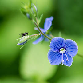 Alexander Senin - A flower and a fly - Featured 3