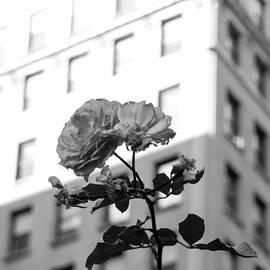 Tyrone McCants - A Flower Grows in Brooklyn