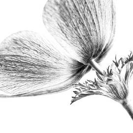Caitlyn  Grasso - A Flower Of No Color