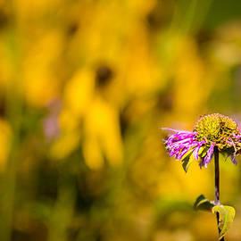 Onyonet  Photo Studios - A Flower