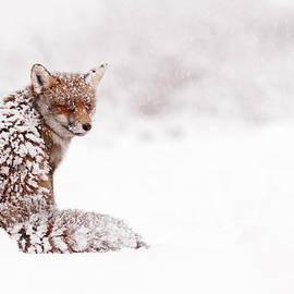 Roeselien Raimond - A Red Fox Fantasy