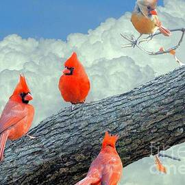 Janette Boyd - A Gathering of Cardinals