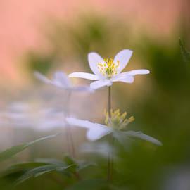 Sarah-fiona  Helme - A Gentle Bliss