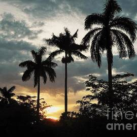 Debb Starr - A Glowing Sunset with Palms