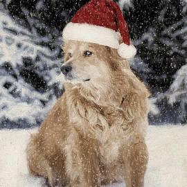 Darren Fisher - A Golden Christmas