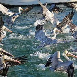 Cynthia Guinn - A Group Of Pelicans