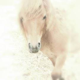 Karol Livote - A Horse