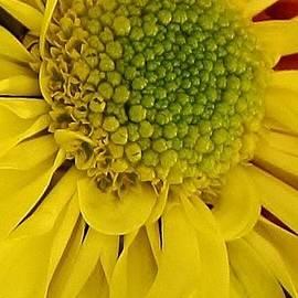 Bruce Bley - A Jewel in the Petals