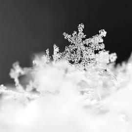 Rona Black - A Jewel of a Snowflake