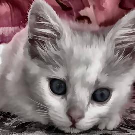 rdm-Margaux Dreamations - A Kitten Named Raiden