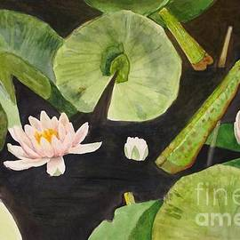 Nancy Kane Chapman - A Lily Pond