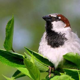 Lori Pessin Lafargue - A Little Birdie Told Me