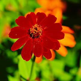Jeff  Swan - A Little Red Flower