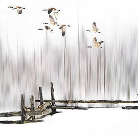Andrea Kollo - A Little Winter Magic