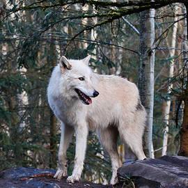 Athena Mckinzie - A Lone Wolf